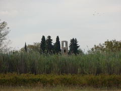Ruines de la chapelle Saint-Martin - Français:   Vue de la chapelle de Saint Martin depuis la cave de Saint-Victor-la-Coste.