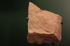 Hôtel de Fleury (Musée Dardé) - Fossile du carbonifère supérieur (- 307 000 000 à - 299 000 000 ans): scorpion.
