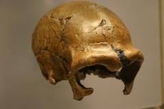 Gisement paléolithique dénommé Gisement de la Quina -  Taken at the David H. Koch Hall of Human Origins at the Smithsonian Natural History Museum.  www.ideonexus.com