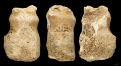 Gisement paléolithique dénommé Gisement de la Quina - English: Retoucher on the distal end of humerus ungulate. Stage: Middle Paleolithic (Quina Mousterian) (to – 300 000 to   - 30 000 Before the Current Era) Locality:  La Quina, Gardes-le-Pontaroux, Charente, France Former collection  of Léon Henri-Martin  (1864 - 1936)) Different views of the same specimen  - Muséum of Toulouse MHNT PRE.2006.0.27</dd>