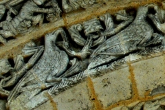 Eglise Notre-Dame - Deutsch: Ayy, Vögel streben himmelwärts, Detail Archivolte 2