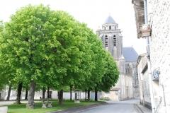Eglise Sainte-Marie ou Notre-Dame -  Eglise de Lonzac_tilleuls