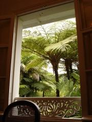 Villa Folio -   Description: Fougère arborescente dans la cour de la villa Folio, novembre 2004, La Réunion   Source: Bouba