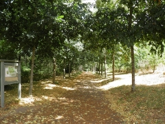 Domaine de la Garenne-Lemot (également sur communes de Clisson, dans la Loire-Atlantique, et Cugand, en Vendée) - English: Lane in the park of La Garenne Lemot.