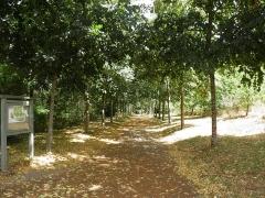 Domaine de la Garenne-Lemot (également sur communes de Clisson, dans la Loire-Atlantique, et Cugand, en Vendée) - English: Lane in the park of La Garenne Lemot.