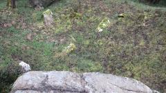 Dolmen dit Pierre-aux-Bignes - Français:   Prise de vue sur le dolmen