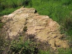 Polissoir - Français:   Polissoir néolithique sur la rive gauche du Laizon inscrit MH à Bons-Tassilly (Calvados)