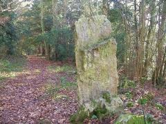 Menhir dit la Roche Piquée - Français:   Menhir classé MH de la Pierre Piquet à St Germain le Vasson dans le Calvados