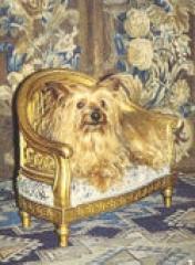 Château de Vendeuvre -  Dog\'s chair