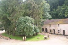 Abbaye du Val des Choux -  Courtyard