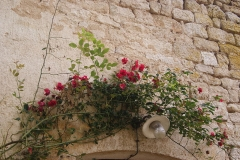 Abbaye du Val des Choux -  Over the door