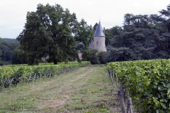 Château de Tracy -  The vineyards of Château de Tracy produce the renowned