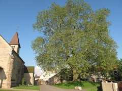 Eglise - English: The church and the platanus in Préty (Saône-et-Loire, France).
