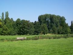 Domaine de Jean-Jacques-Rousseau - Français:   La «grande rivière» au «Petit Parc», au nord du château. Ce secteur ne fait pas partie du parc Jean-Jacques Rousseau. Il est entretenu par l\'hôtel-restaurant du château.