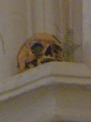 Eglise Notre-Dame-des-Pommiers - Français:   Crane du comte de Saillans; Église Notre-Dame-des-Pommiers, Largentière, Ardèche, France