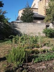 Eglise Saint-Just - Français:   Jardins ouest: potager.