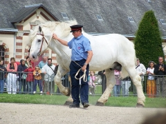 Haras national -  Percheron. For more information:   www.haras-national-du-pin.com