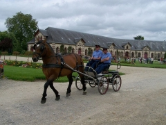 Haras national -  For more information:   <a href=
