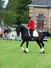 Haras national -  For more information: http://www.haras-national-du-pin.com