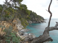 Domaine du Rayol - English: View from coastal path of Domaine du Rayol