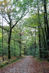 Ensemble fortifié de la chapelle et du pont de Chevré - Chemin forestier de la Forêt de Corbière, celle-ci faisant partie de la forêt de Chevré - Ille-et-Vilaine - France