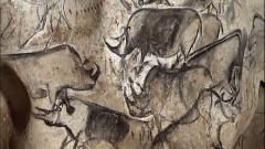 """Grotte ornée du paléolithique supérieur située au lieudit """"Combe d'Arc"""" dite grotte Chauvet -  Rhino drawings from the Chauvet Cave"""