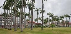 Place de l'Esplanade, dite place des Palmistes - English: Place des palmistes in Cayenne, French Guiana. Avenue du Général-de-Gaulle in the background.