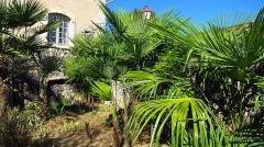 Ancien Hôtel Dieu, actuellement résidence Hector d'Ossun - Français:   Saint-Lizier (Ariège, Midi-Pyrénées, France): Jeunes semis spontanés de Trachycarpus fortunei dans le jardin de l\'Hôtel-Dieu.