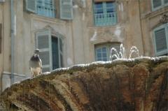 Immeubles formant la place d'Albertas -   Fontaine de la Place d\'Alberta à Aix en Provence  Photographie de Jimmy Jadas