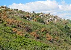 Oppidum de la Cloche - English: North area, seen fron east.