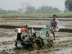 Château de Bourgon - English: 2WT puddling (plowing) soil for rice tranplanting in Dinajpur District, Bangladesh