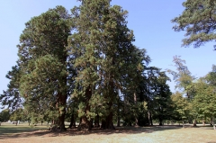 Château de la Brosse - Deutsch: Schloss La Brosse im französischen Département Cher - als Ring angelegte Baumgruppe im Landschaftsgarten