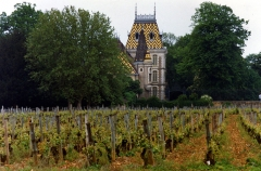 château de Corton-André -  Domaine viticole à Aloxe-Corton (Bourgogne, France)