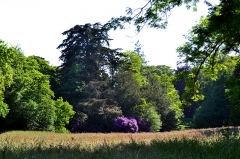 Domaine de Kernévez - Français:   Parc du château de Kernevez à Saint-Pol-de-Léon (Finistère).
