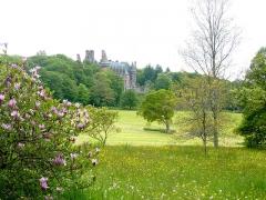Ancien pavillon de chasse de Moniven - Français:   Le château de Trévarez vu du parc et un magnolia en fleurs