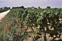 Château d'Yquem - Deutsch: Blick auf Weingut Château d'Yquem