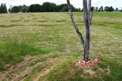 Mémorial terre-neuvien et parc commémoratif - English: Danger Tree site and replica, Beaumont-Hamel battlefield.