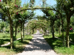 Domaine dit d'Albert Kahn - English: Pergola cloaked in trained roses framing an avenue walk. In a French formal garden (Garden à la française) of Albert Kahn.