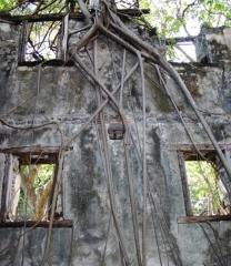 Lazarets de La Grande Chaloupe -  Intérieur du dortoir du Lazaret 2 (Saint-Denis), dans son écrin végétal.