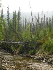 Eglise paroissiale Saint-Martin - English: Brown Creek, Yukon - Alaska border