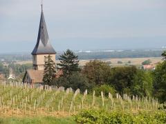 Eglise protestante -  Alsace, Bas-Rhin, Barr, Église protestante Saint-Martin (XIIe-XIXe), rue de l'Église (PA00084598, IA00115060) Vue à partir du vignoble.