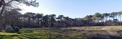 Quatre-vingt-deux menhirs alignés - English: Locmariaquer, France. Alignement de Kerlescan: cromlech sud.