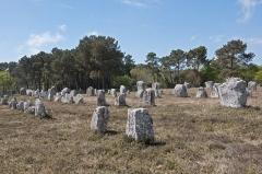 Quatre-vingt-deux menhirs alignés - Français:   Menhirs de l\'alignement de mégalithes de Kerlescan, à Carnac (Morbihan, Bretagne, France)