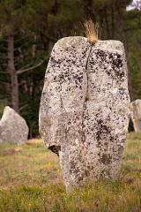 Quatre-vingt-deux menhirs alignés - Français:   Alignement de Kerlescan
