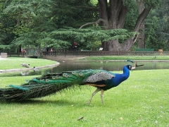 Jardin Massey -  Jardin Massey