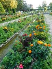 Jardin des Prés Fichaux - Français:   Rigole fleurie (pétunia, œillet d\'Inde, canna, etc.), jardin des Prés-Fichaux, Bourges, Cher, France.