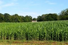 Château - Français:   Champs de maïs au lieu-dit les Prés d\'Avaux, sur la commune de Noironte, durant l\'été 2018. À l\'arrière-plan au centre de l\'image, on aperçoit le château de Noironte.