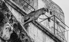 Cathédrale Notre-Dame et Saint-Castor - English: Gargoyle of the Cathedral of Our Lady and Saint Castor of Nîmes, Gard, France