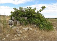 Villa gallo-romaine - Français:   Vue d\'ensemble d\'un puits, peut-être antique et occupé par un figuier. Près des carrières de Gouldeau, Lespignan, Occitanie