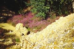 Obélisque - Français:   Photo prise sur le Plateau d\'helfaut en 1994, près de la Colonne d\'Helfaut (près de Saint Omer, dans le Pas de Calais, en France.   Cette zone était autrefois sableuse, naturellement oligotrophe et acide, entretenue par les lapins l\'extraction épisodique de sable abritaient des tapis de bruyère callune (Calluna vulgaris) et de bruyère à 4 angles (Erica tetralix) encore nombreuses au début des années 1990. Ils ont brutalement disparu, en grande partie ensevelis par des apport massif de sable et gravats (plus de 2 m d\'épaisseur) issus des travaux d\'agrandissement d\'un hopital voisin. Le haut de la zone s\'est ensuite couverte d\'un tapis de graminées, mais au détriment des espèces qui y trouvaient autrefois un habitat particulier (dont de nombreux hyménoptères et coléoptères fouisseur en particulier)